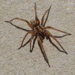 Уничтожение пауков в Златоусте